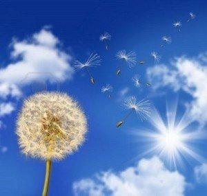 vent-souffle-contre-le-ciel-bleu